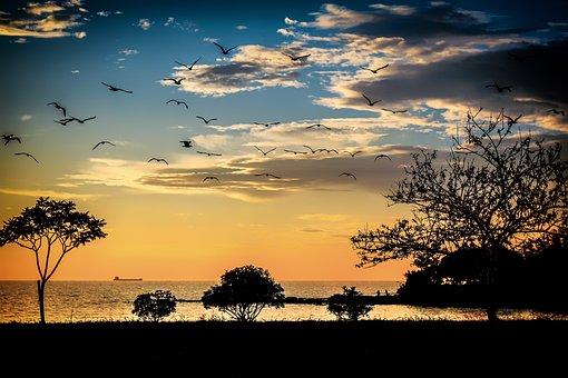 Croatia, Umag, Sea, Adriatic Sea, Istria, Mediterranean