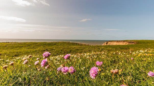 Flowers, Meadow, Sea, Green, Nature, Summer, Plant