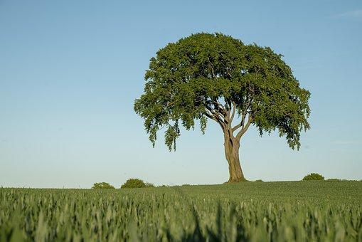 Tree, Field, Landscape, Nature, Sky, Meadow, Rural