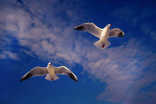Gulls, Sky, Bird, Nature, Wing, Water Bird