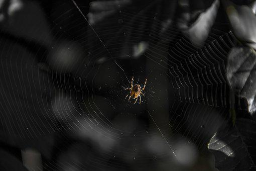 Spider, Forest, Hotel, Cobweb, Nature