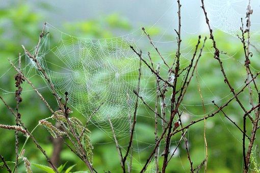 Spider Web, Fog, Morning, Rosa, Dry, The Bushes, Summer