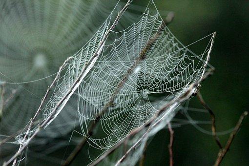 Spider Web, Fog, Morning, Rosa, Honeysuckle, The Bushes