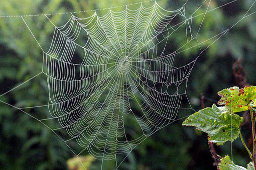 Spider Web, Fog, Morning, Rosa, Summer, Green, Leaves