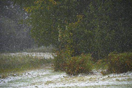 Snow, Forest, Snowflakes, Summer, Trees, Thicket