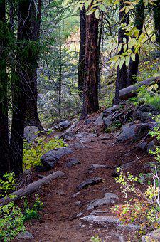 Forest Trail, Mountain Trail, Trail, Nature, Mountains