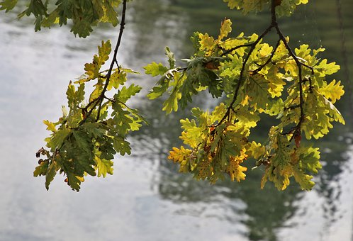 Sprig, Yellow, Foliage, Park, Plant, Nature