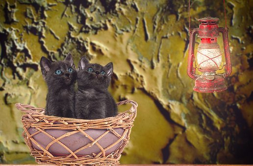 Cat, Young, Basket, Sitting, Lantern, Light, Animal