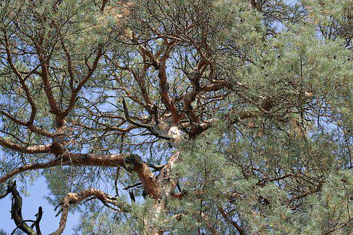 Tree, Crown, Nature, Green, Sky, Wood, Aesthetic