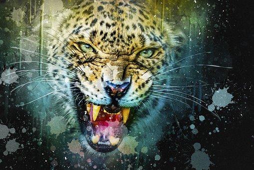 Leopard, Cat, Predator, Hunter, Animal, Nature, Wildcat