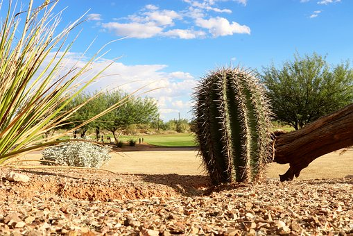 Cactus, Arizona, Desert, Nature
