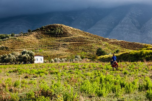 Landscape, Light, Nature, Hill, Atmosphere, Donkey