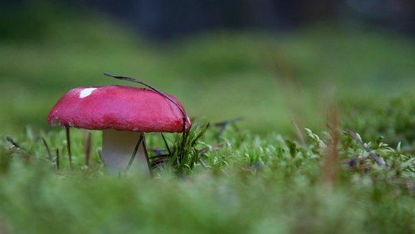 Mushroom, Forest, Autumn, Amanita, In The Fall, Moss