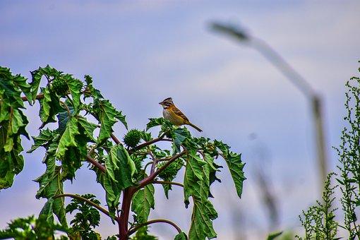 Bird, Ave, Nature, Nest, Feathers