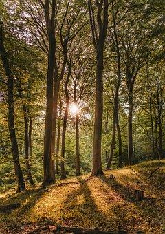 Beech Wood, Sunset, Forest, Book, Rügen, National Park