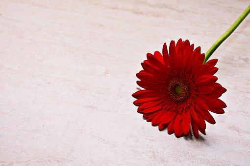 Red, Bloom, Blossom, Plant, Nature, Petals, Rose
