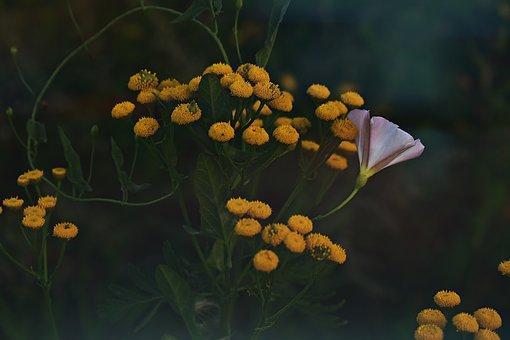 Yellow, Nature, Summer, Blossom, Bloom, Flowers