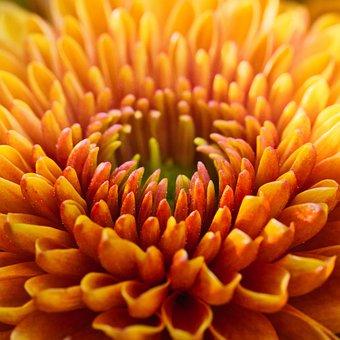 Dahlia, Blossom, Bloom, Bright, Close Up, Dahlia Garden