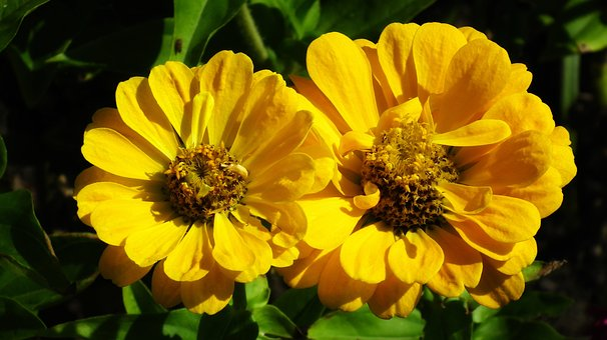 Tin, Flowers, Yellow, Summer, Nature, Garden, Closeup