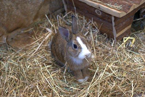 Dwarf Rabbit, Rabbit, Hare, Pet, Easter, Cute, Garden