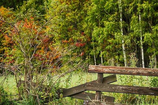 Autumn, Landscape, Fall, Nature, Fence