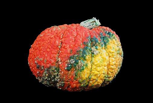 Squash, Pumpkin, Ugly, Knobbly, Autumn, Fall