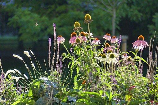 Flowers, Autumn, Light, Nature, Flower, Plants