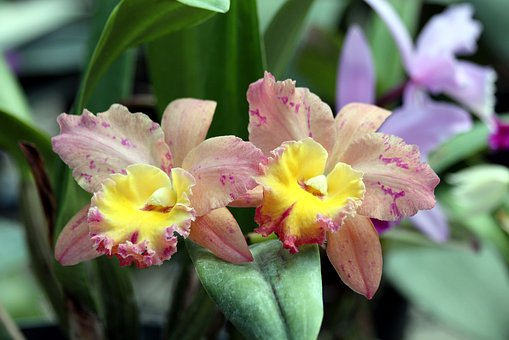 Orchid, Flowers, Beautiful, Bloom, Plant, Closeup