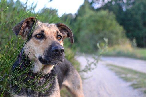 Green, Nature, Cottage, Summer, Dog, Animal, Forest