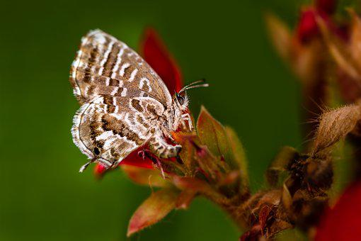 Butterfly, Nature, Insects, Summer, Macro, Garden