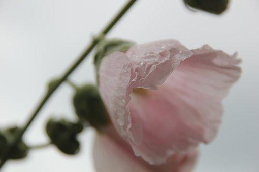Flower, Plant, Blossom, Bloom, Nature, Garden, Spring