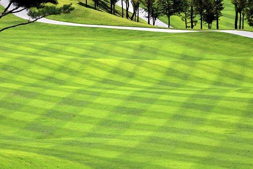 Golf, Green, Field, Grass, Sport, Golfers, Golf Course
