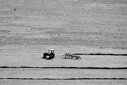 Tractor, Field, Grass, Crop, Work, Agriculture, Harvest