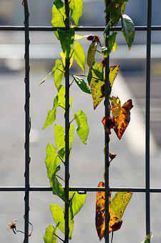 Grid, Plant, Overgrown, Nature, Leaves, Fence