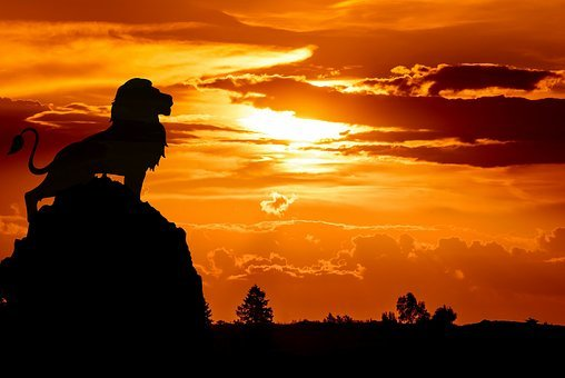 Lion, King, African, Silhouette, Sun, Africa, Alone