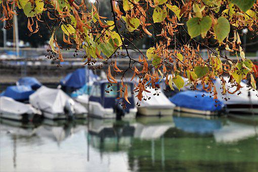 View, Autumn, Lake, Landscape, Spacer, Foliage, Beach