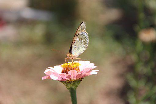 Flower, Insect, Butterfly, Bloom, Macro, Insects