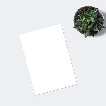 Flatlay, Plant, Ecommerce, Mockup, Blank, Paper