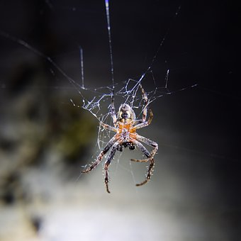 Garden Spider, Cobweb, Spider, Insect, Nature, Web