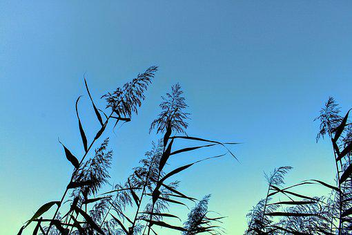 Sky, Nature, Reed, Water, Lake, Landscape, Plant, Grass