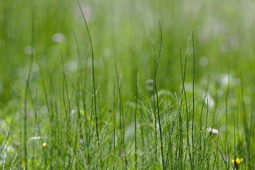 Blur, Nature, Grass, Plant, Close Up, Bokeh, Macro