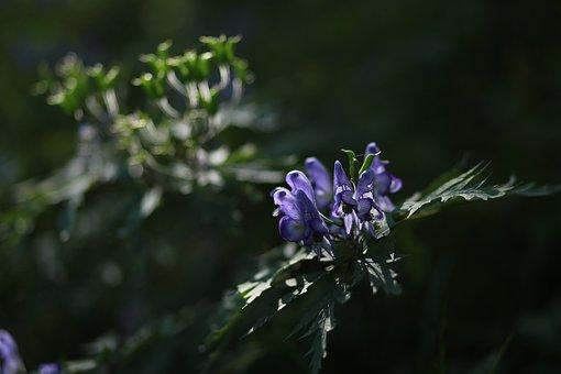 Headpiece Flower, Wildflower, Flowers, Nature, Plants