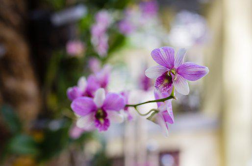 Flower, Nice, Orchids, Page, Rolling