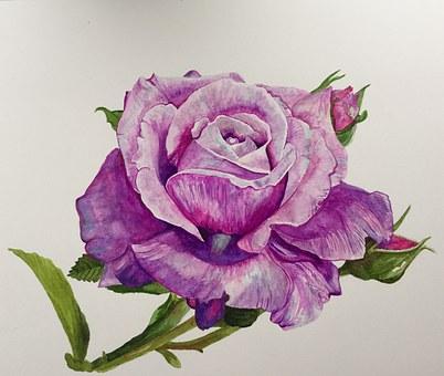 Painting, Rose, Blue Moon, Watercolor, Elegant, Leaves