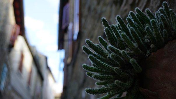Succulent, Italy, Cactus, Alley, Doorstep, Plant