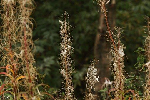 Autumn, Fall, Nature, Plant