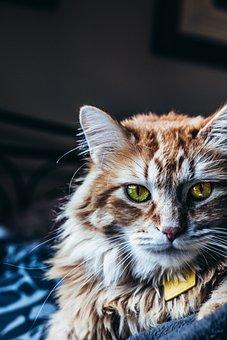 Cat, Eyes, Pet, Portrait, View, Domestic Cat, Close Up