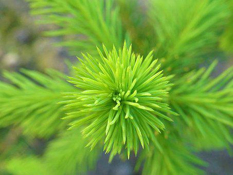 Prickly, Plant, Nature, Green, Close Up, Wild Flower