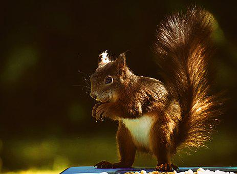 Squirrel, Animal, Nager, Nature, Cute, Rodent, Garden