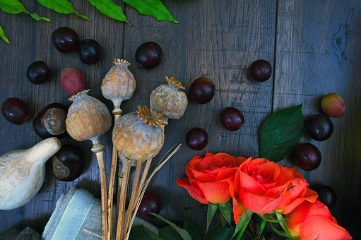 Rose, Poppy, Dried Plant, Color, Chestnut, Still Life